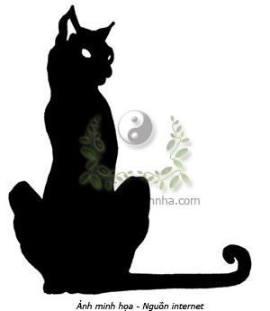 mèo, mèo đen, nhau thai mèo, miêu bào y