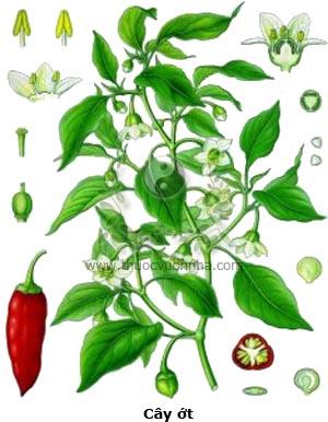 cây ớt