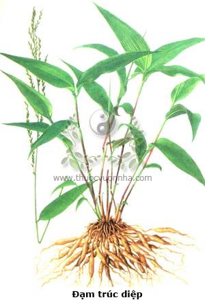 cỏ lá tre, đạm trúc diệp, toái cốt tử, trúc diệp mạch đông, mễ thân thảo, sơn kê mễ, Lophatherum gracile Brongn.