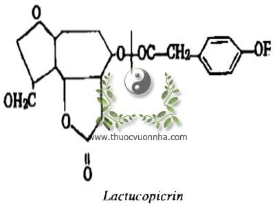 Lactucopicrin, este p. hydroxy phenylaxetic