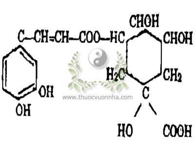 axit clorogenic