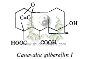 Canavalia gilberellin I