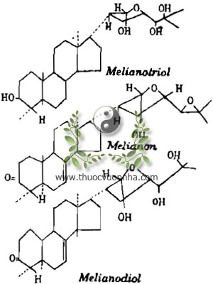 Melianotriol, Melianon, Melianodiol